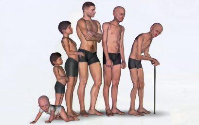 Relação lógico-cientifica entre Massa Muscular e Sarcopénia por Nelson Lima